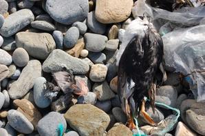 Après la tempête au grés de ma ballade aujoud'hui...les oiseaux ont beaucoup souffert :-)