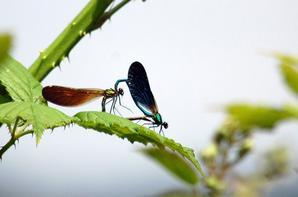 """Quand les libéllules sont en mode """"love""""....trop mimi"""