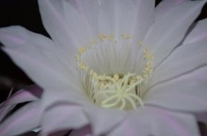 fleur éphémère