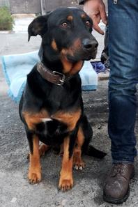 Distribution de croquettes aux chiens de SDF