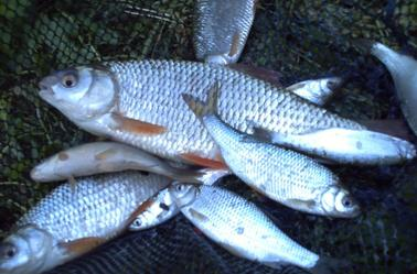 quelques  poisson d'après midi