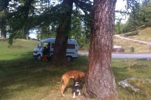 Week end dog sitting, Col Du Tronc (Valais)