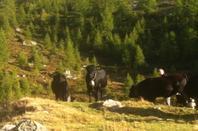 Alpage de Fenestral (Valais)