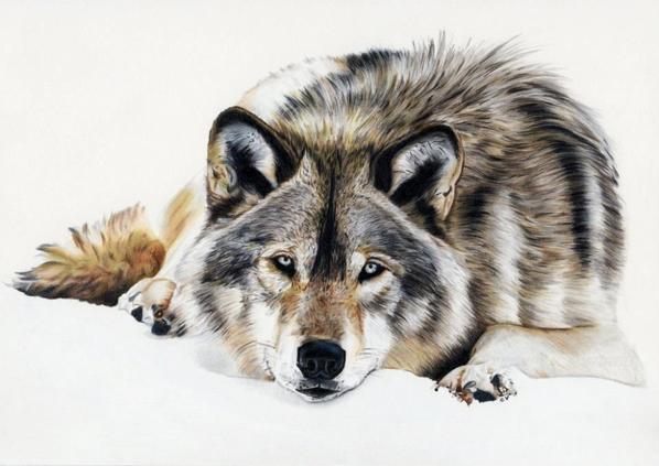 Portrait d'animaux.