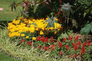 jardin des plantes pas loin de chez moi