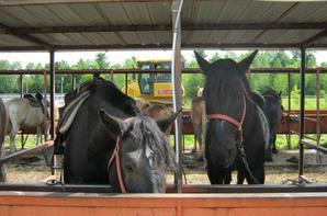 3 nouveaux chevaux, de puis ce matin !!!  Superbes Bêtes !!!