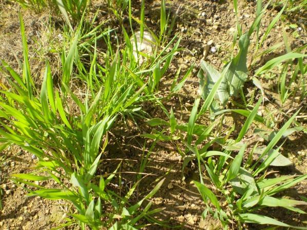 rubisko semis du  21/10 zones humides