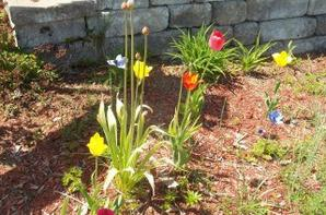 les plus bellesa fleurs du primptemps