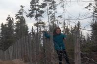 les arbres la richesse de la terre