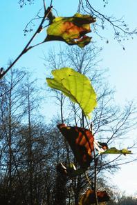 PHOTOS PERSO: feuilles de vitrail et arbritecture