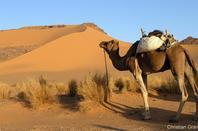 toujour le maroc