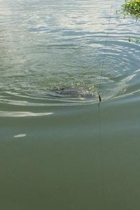 Péche A La Pêche A Terte Au Grand Rieu