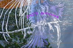 Les faucheuses (voir les 8 photos)