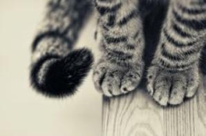 Miaou !!!!!