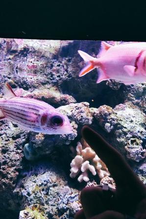 Jimin à l'aquarium !