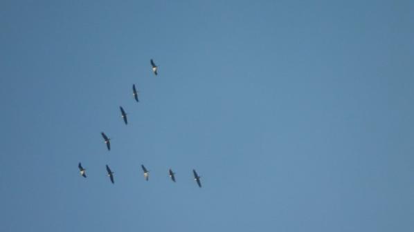 Vols de Grues