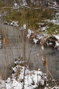 Images d'étangs enneigés