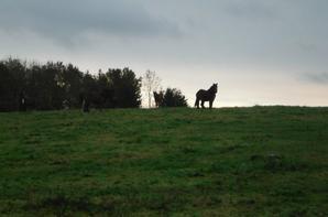 Rentrée de nos Traits Ardennais avant la neige...