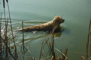 Promenade aux étangs en Argonne, et souvenirs