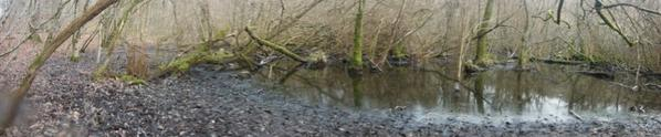 Le long des étangs...