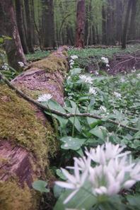 Dame nature en Argonne