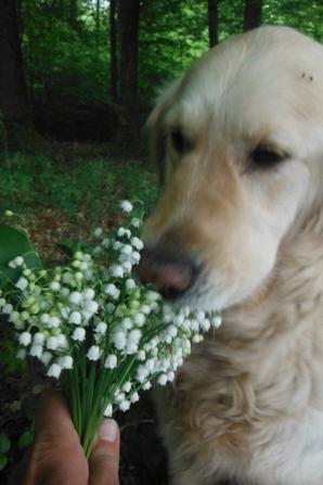 Fleurs des zones humides d'Argonne