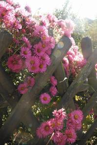 Jour d'automne en Argonne