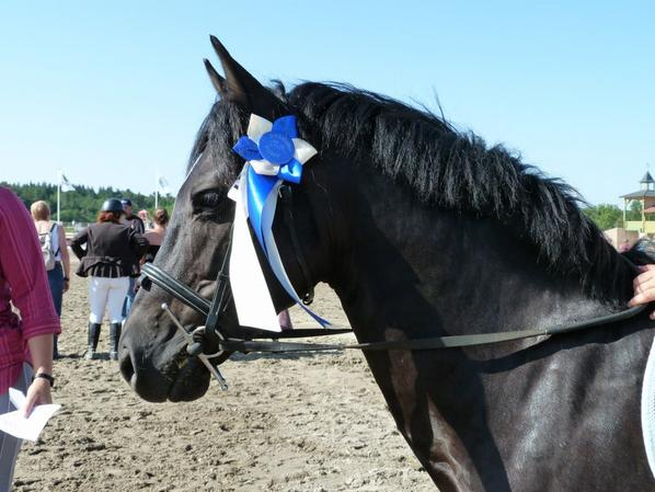 Sologn' pony 2012