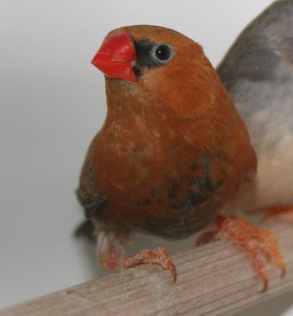 photo d oiseau que je recherche en cp