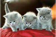 Des pôtits chats