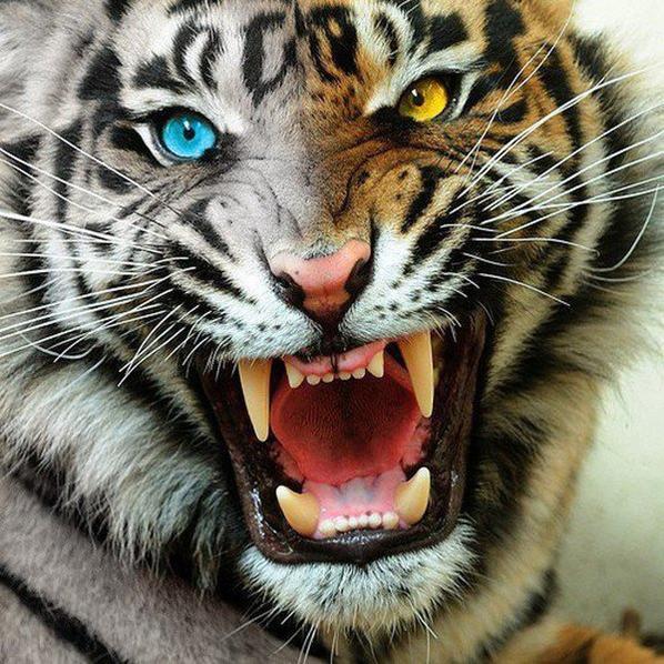 j ignore ceux qui me critique une tigresse se retourne jamais quand une chienne aboie