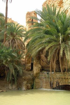 Chebika  Oasis de montagne   au sud de la Tunisie