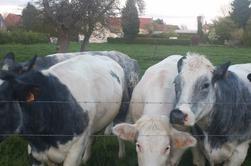 """QUELQUES PHOTOS DE BELLES VACHES DANS NOS CAMPAGNES ,on dirait les vaches """"MILKA"""" le célèbre chocolat"""