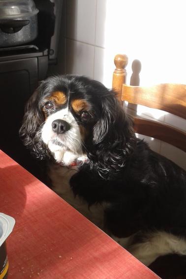 QUELQUES PHOTOS DE DELFY et ses s½urs canines