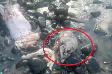 Découverte macabre d'un pêcheur comorien après avoir capturé un requin