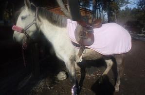 Noel pour les chevaux du camping :)