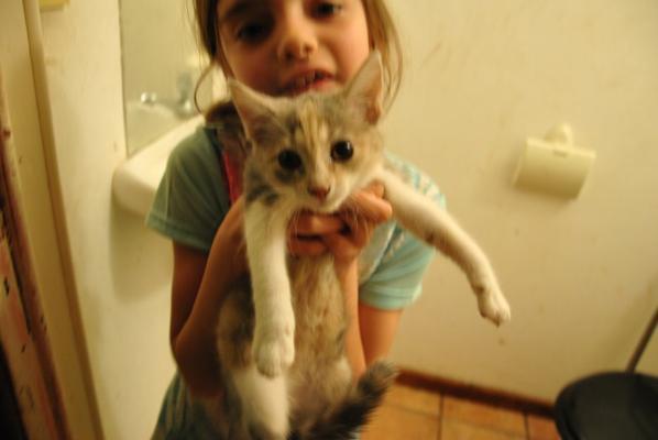 notre nouvelle petite chatontortue d ecaille chanelle..