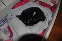 ma femelle qui avait eu des bebes chats y a 1 mois d ici...