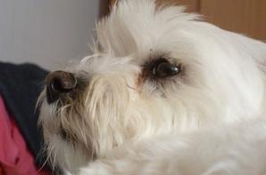 Papillons + mon chien Derly