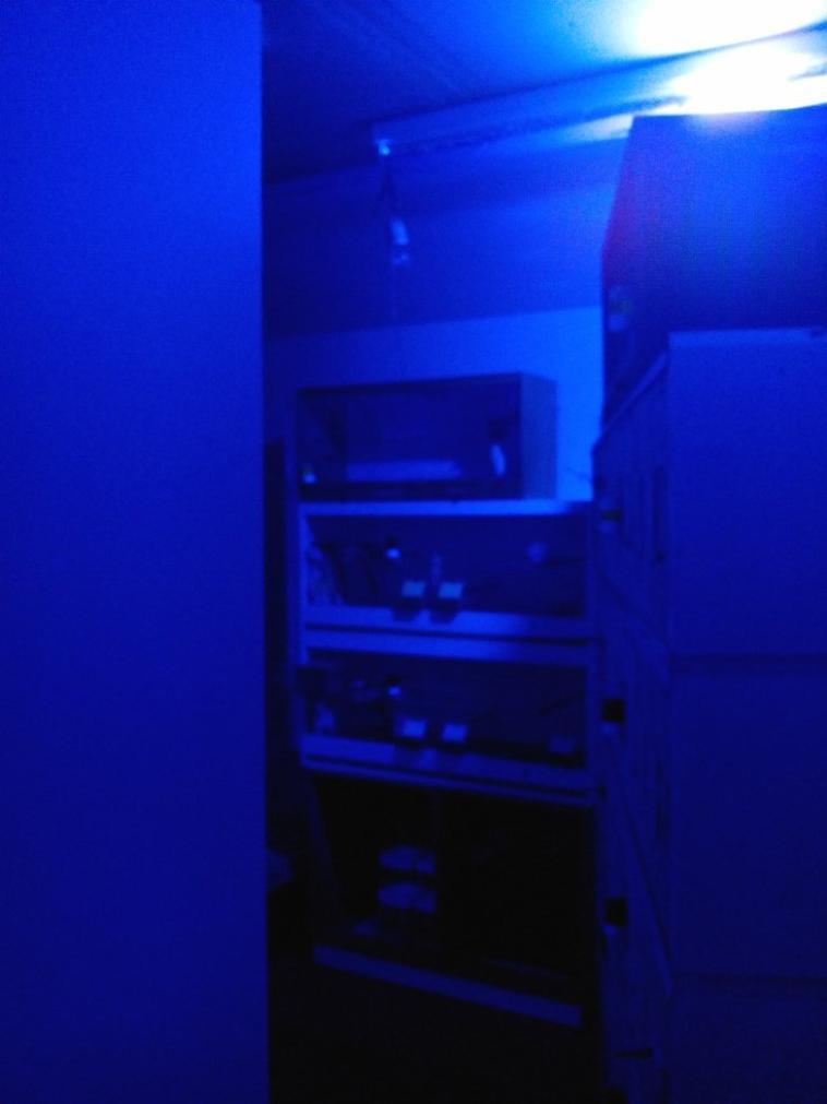 pièce d'élevage de nuit