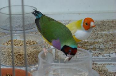 mes oiseaux et les pinkies