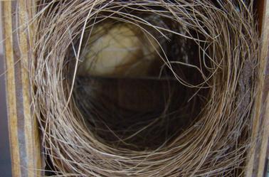 les nids