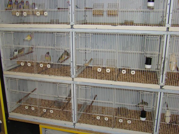 fond de cage