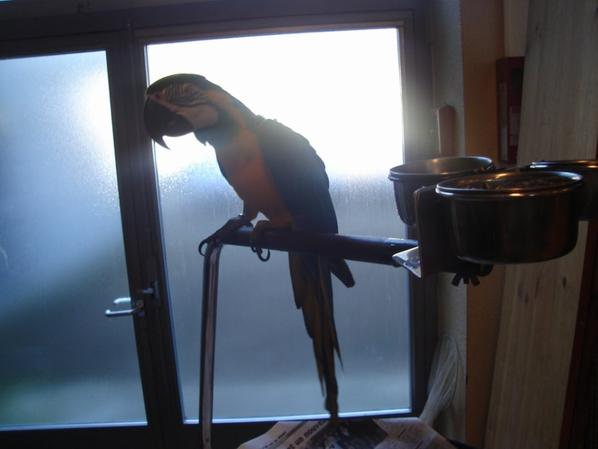 bourse aux oiseaux