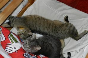 Mes deux tigresses