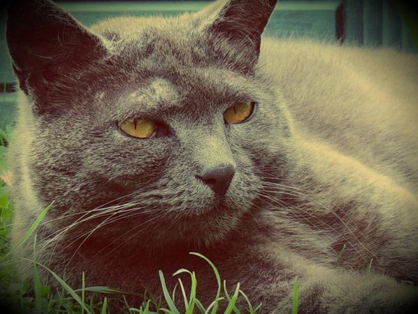 [Il y a deux moyens d'oublier les tracas de la vie : la musique et les chats] -Albert Schweitzer