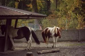 Tierpark de Bern