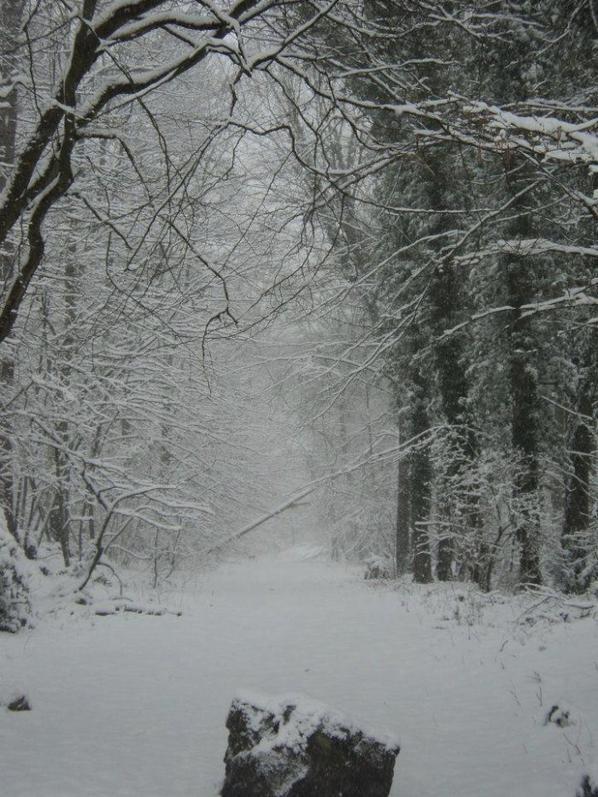 rale de la neige