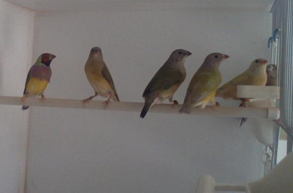 jeunes 2014 en plumage juvénile