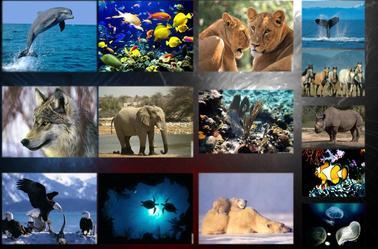 Quelques animaux en voie de disparition